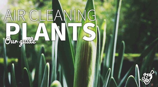 Air cleaning plants: a list post image