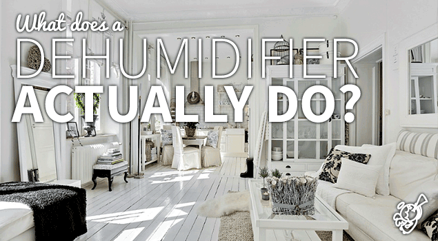 What does a dehumidifier do? post image