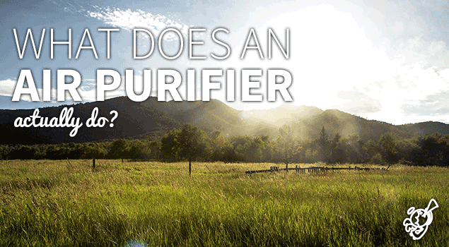 What does an air purifier do? post image