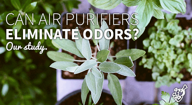 Can air purifiers serve as odor eliminators? post image